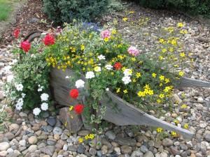 Zahrada zahradnictví Kamélie
