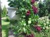 """Zahrada """"Zahradnictví Kamélie"""""""